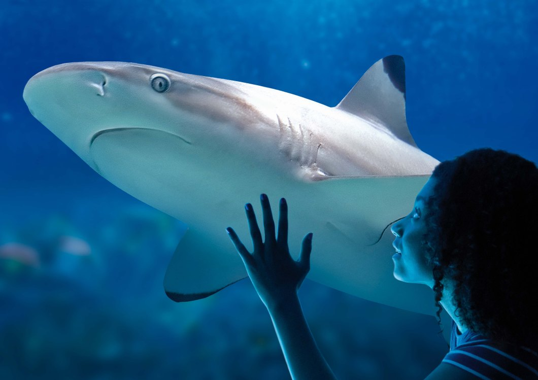 requin pointe noire fille.jpg